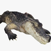 Alligator Animated 3D Model