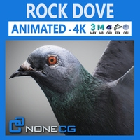 Animated Rock Dove 3D Model